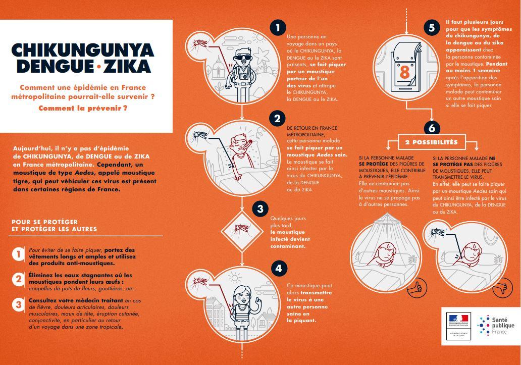 comment le moustique tigre transmet-il les maladies ?