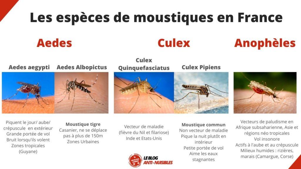 especes-de-moustiques-France