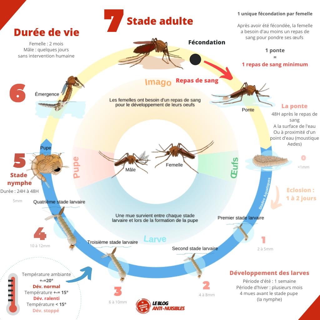 Cycle de vie des moustiques