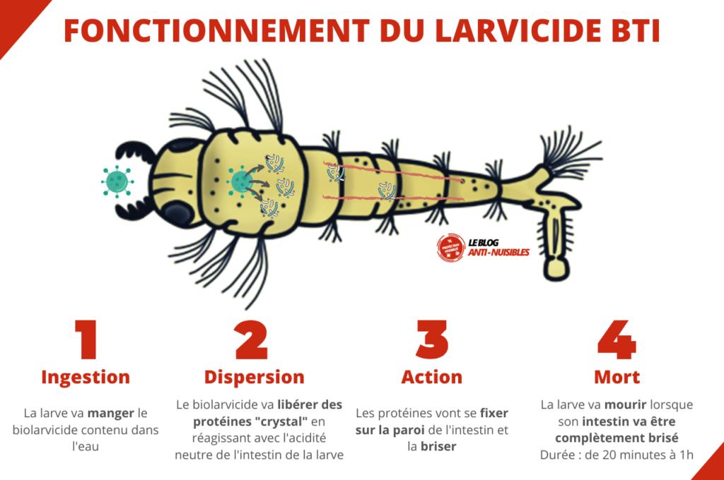Fonctionnement larvicide moustique BTI