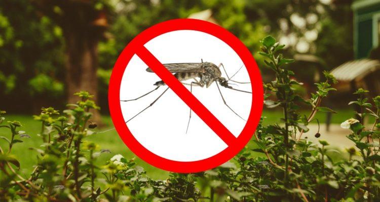 Jardin infesté de moustiques : les conseils pour les éliminer