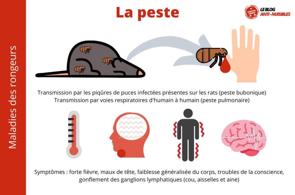La peste maladies rats