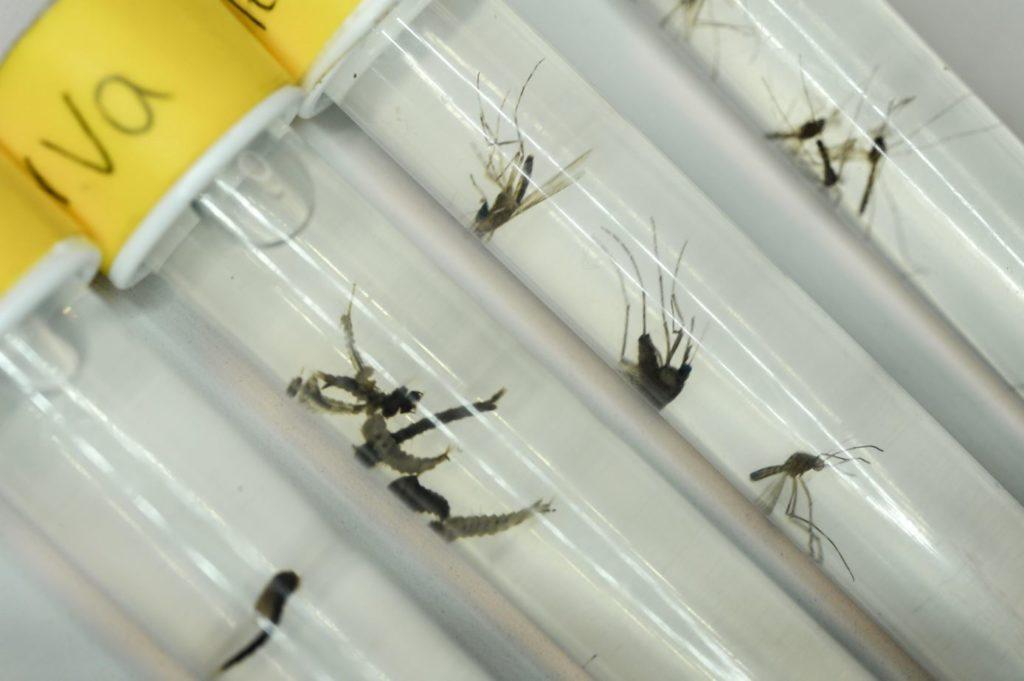 Experience piqure de moustiques