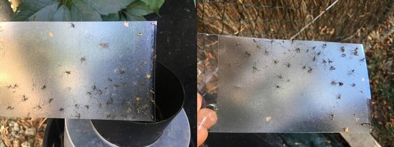 Piege moustique tigre biogents anti larve