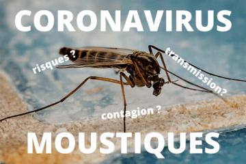 Coronavirus et moustique, les risques