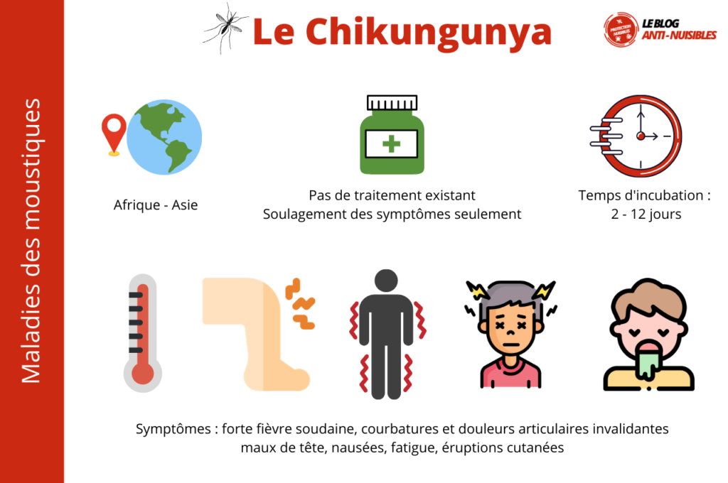Le Chikungunya maladie moustique