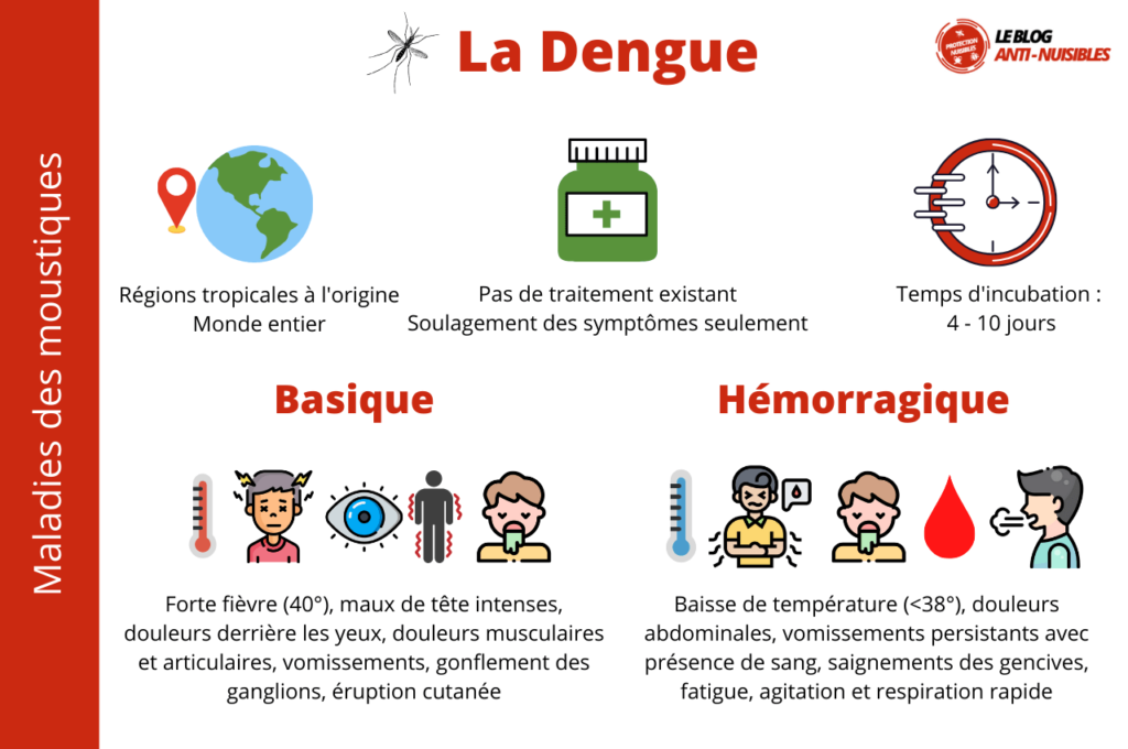 Dengue maladie moustique