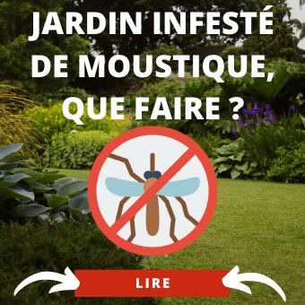 Jardin infesté de moustiques les conseils