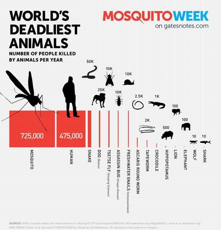 Moustique tueur d'hommes