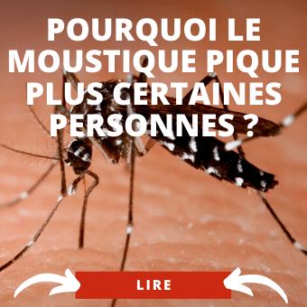 Pourquoi le moustique pique
