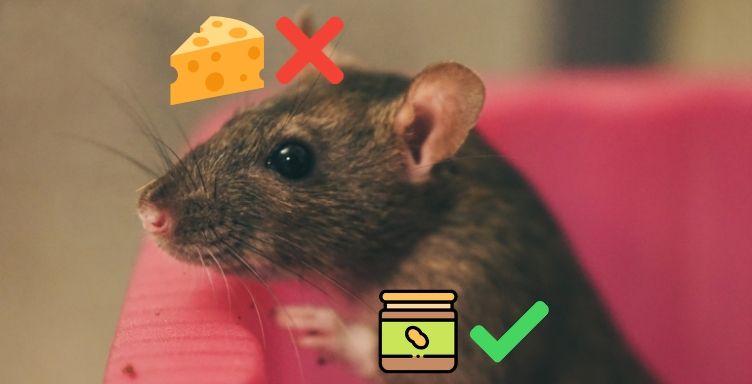 eliminer souris rat quel appat choisir