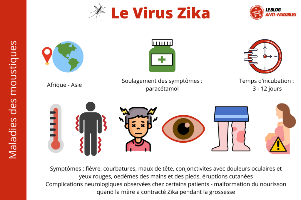 Le Virus Zika maladie moustique
