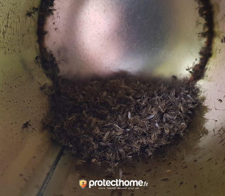 Moustiques attrapés par le piège mosquito magnet