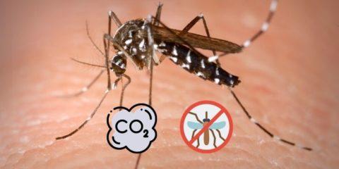 Fabriquer un piège moustique maison