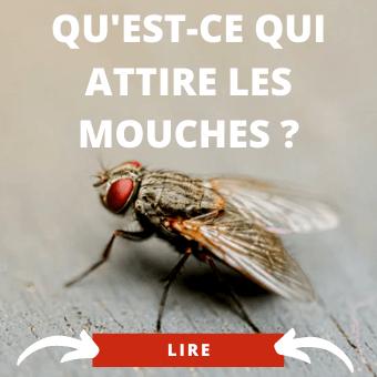 Ce qui attire les mouches