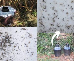 Piège moustique Biogents avis