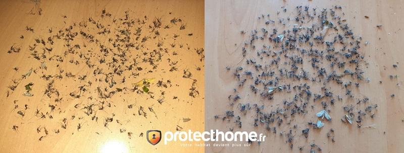 Piège moustique efficace biogents test