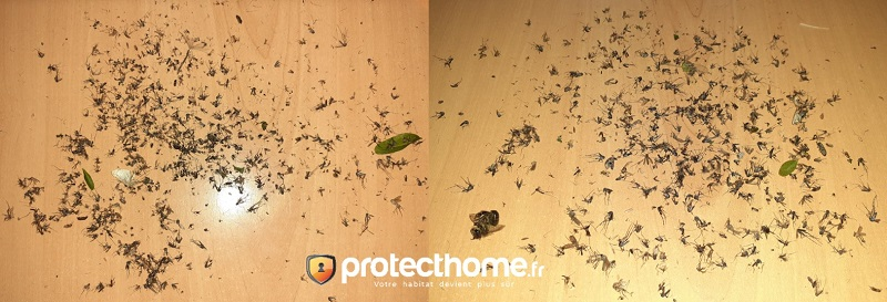 Piège moustique tigre efficace avis biogents