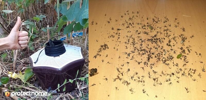 Piège moustique tigre efficace biogents resultats