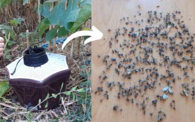 Test piège moustique tigre biogents