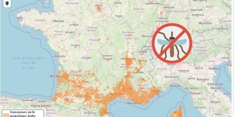 moustique tigre en France