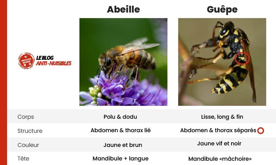 difference guepe abeille comment les reconnaître