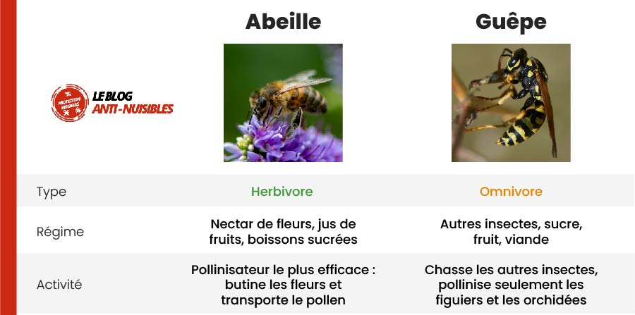 guepe abeille difference carnivore herbivore