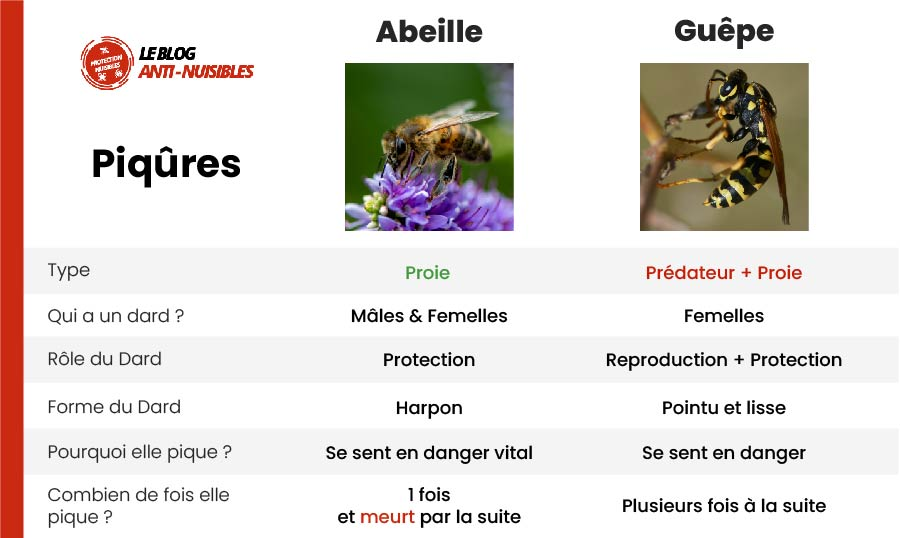 piqure abeille guepe difference