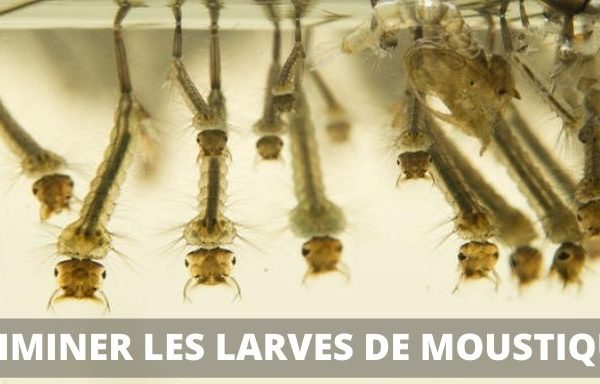 eliminer larve de moustique