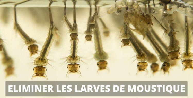 eliminer larve de moustique