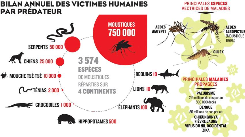morts causées par le moustique - le figaro