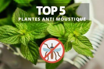 plante anti moustique